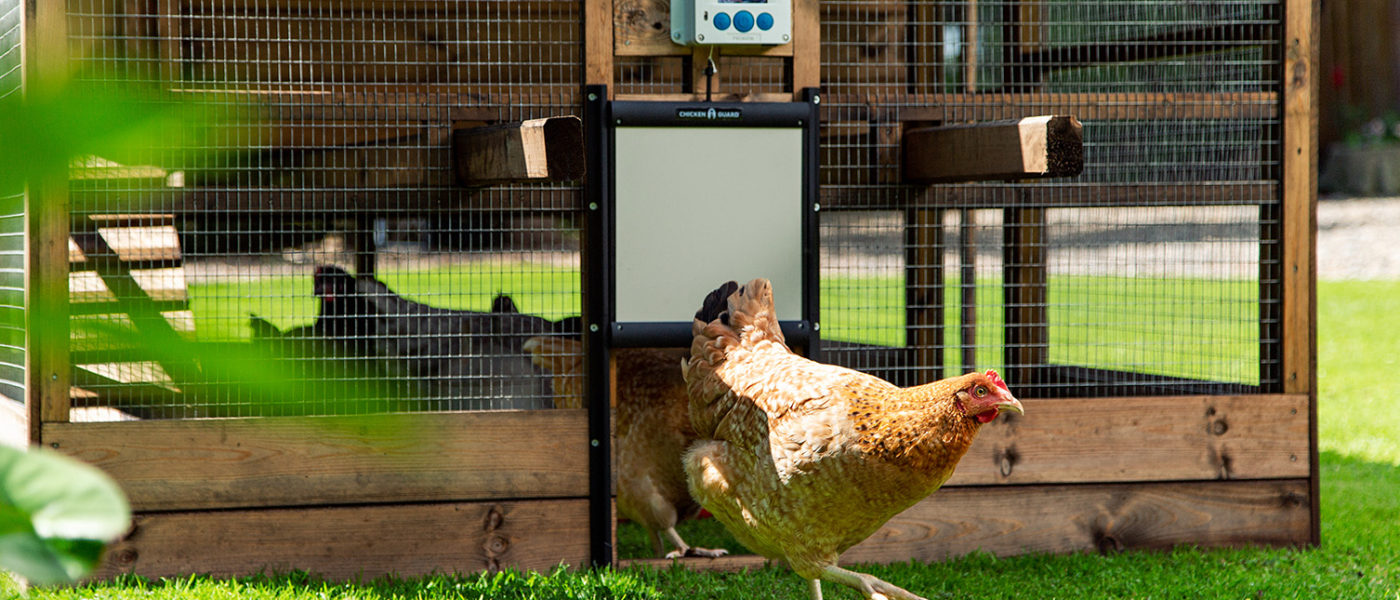 """A Smiths Sectional """"Thicket"""" Coop with ChickenGuard Auto Coop Door Fitted."""
